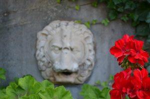 kwiatowy znak zodiaku lew