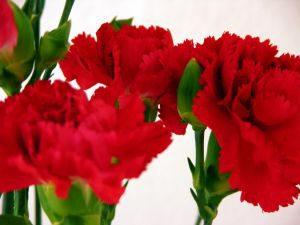 znaczenie-koloru-kwiatow